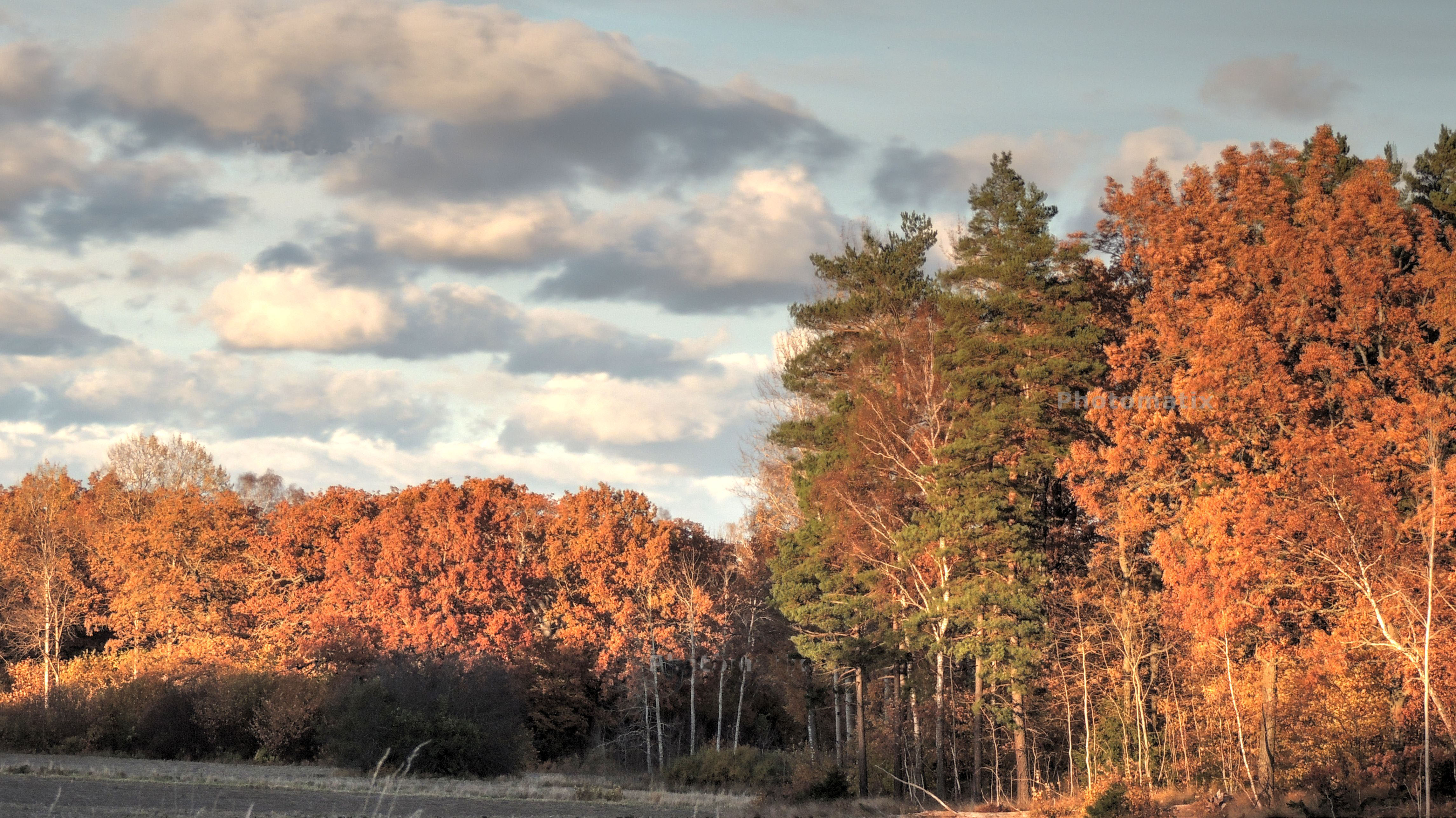 Nu har hösten visat upp alla vackra färger. Fotograf: Ingvar Åslund