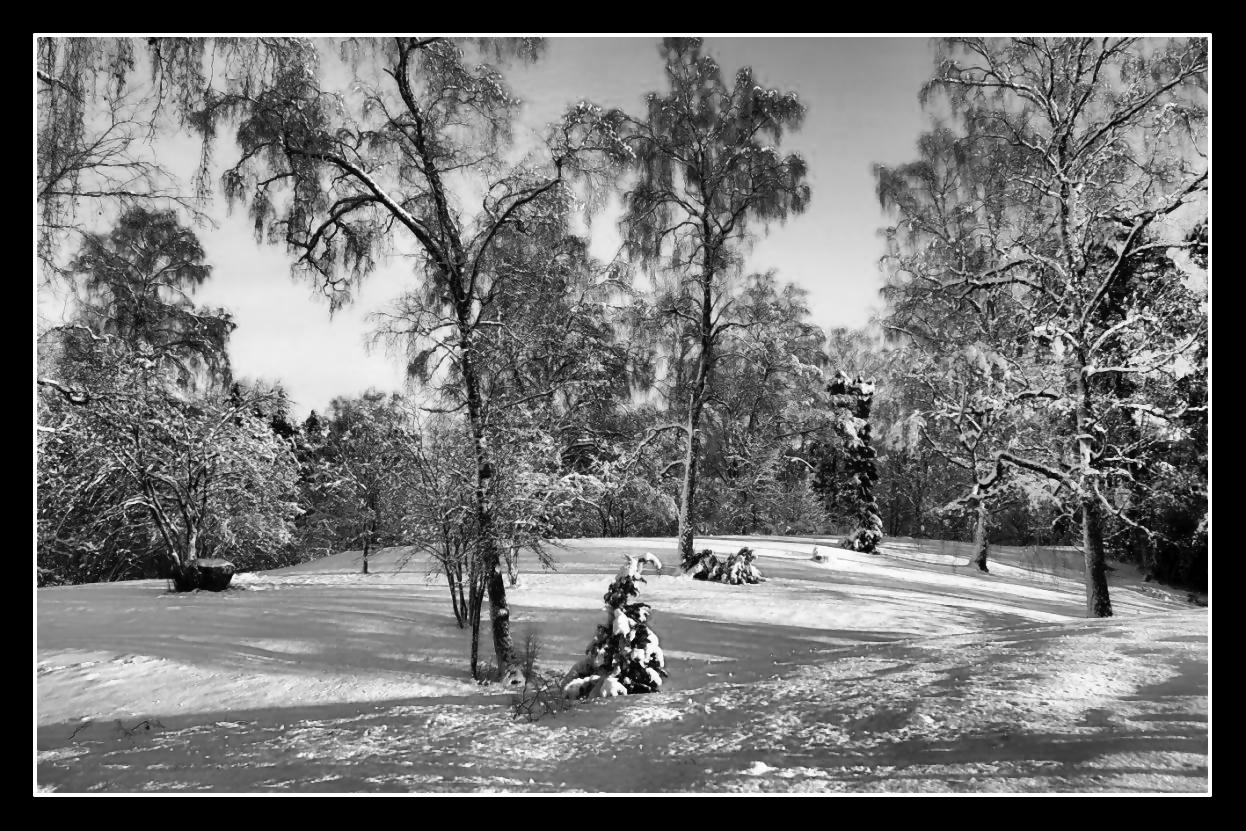 December, Calmare hage svartvit. Fotograf Ingvar Åslund